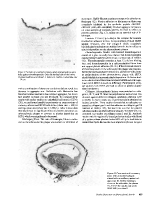 icon of scanned page 625