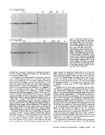 icon of scanned page 61