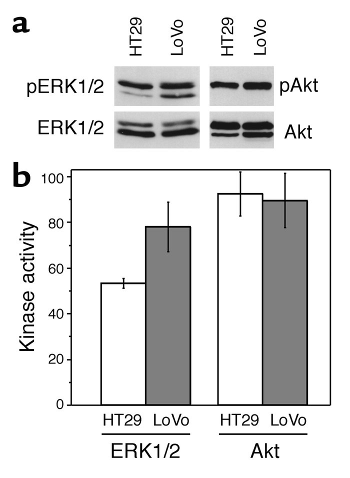 Constitutive activation of ERK and Akt/PKB pathways in HT29 and LoVo cel...