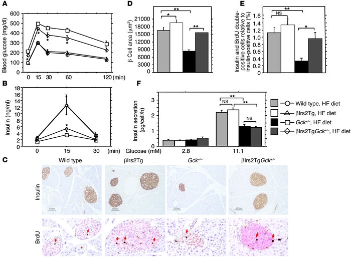 Transgenic rescue by crossing Gck+/– mice with βIrs2Tg mice.            ...