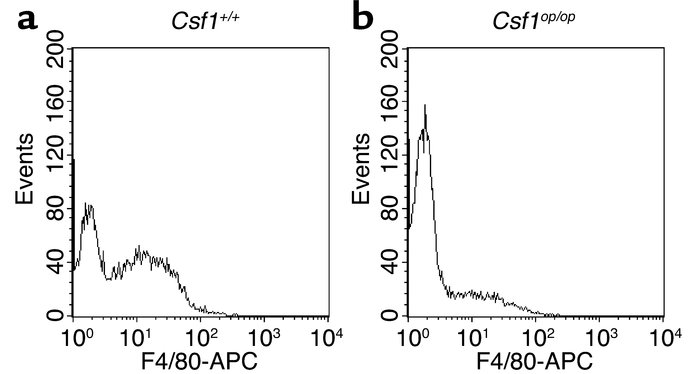 Macrophage-deficient FVB/NJ Csf1op/op mice are also deficient in F4/80+ ...