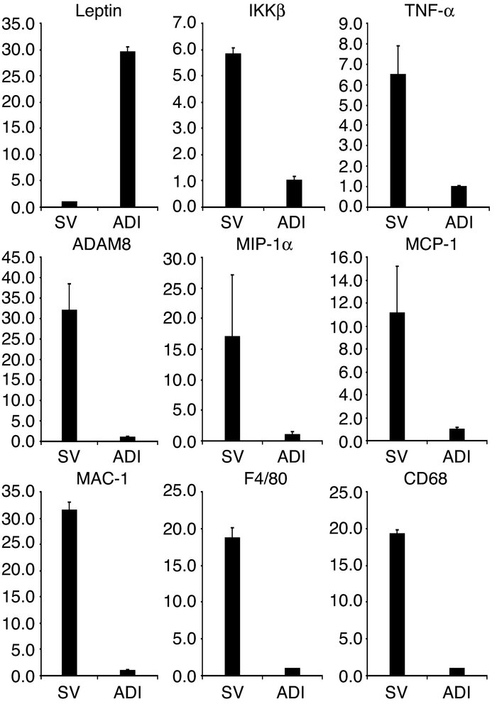The mRNA expression of ADAM8, MIP-1α, MCP-1, MAC-1, F4/80, and CD68 in s...