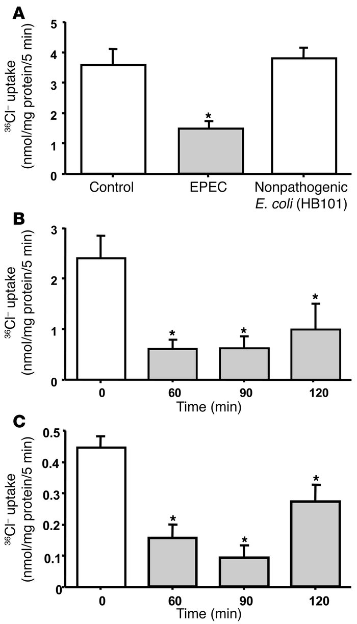 EPEC inhibits Cl–/OH– exchange activity.                 (A) Caco-2 cell...