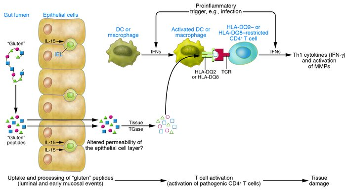 download Tumor Angiogenesis Assays: Methods and