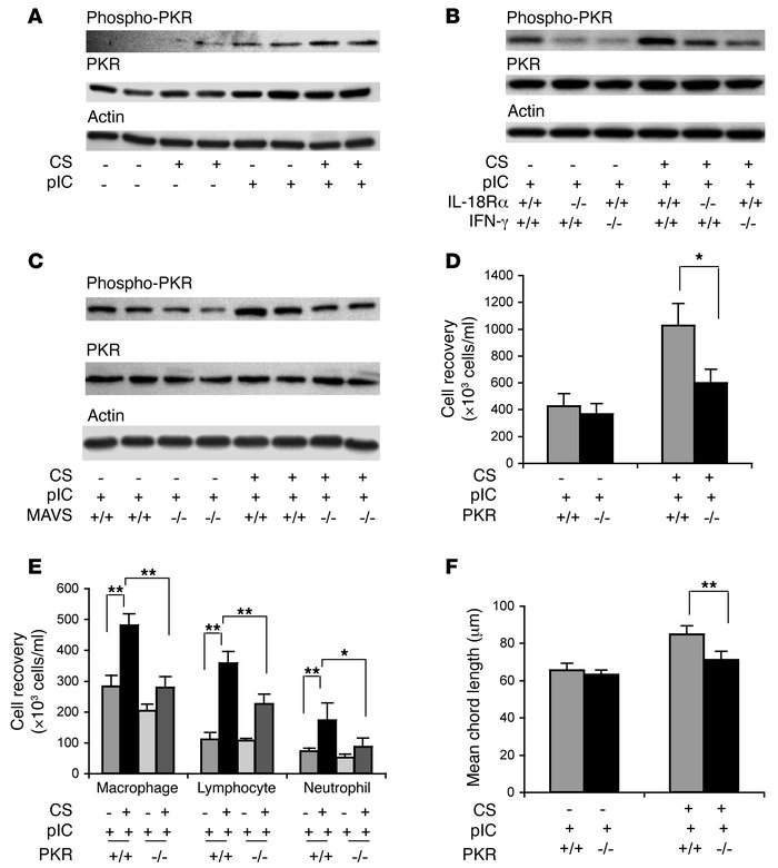 Regulation and roles of PKR in the interaction of CS and poly(I:C). Mice...