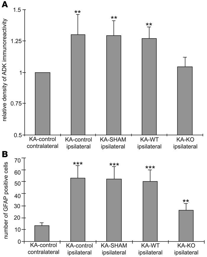 Quantitative assessment of ADK immunoreactivity and GFAP expression in t...