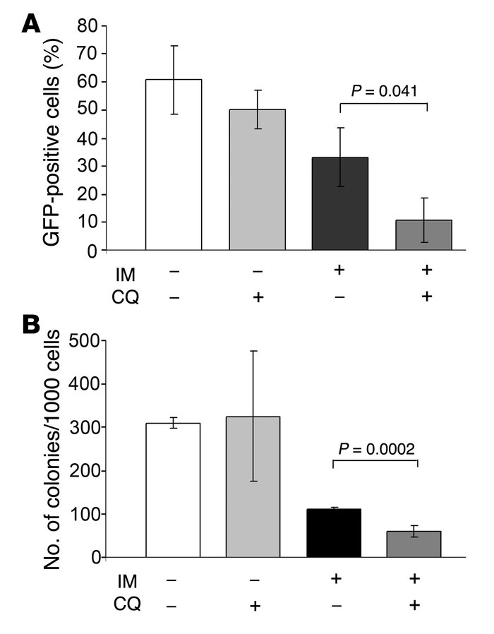 CQ treatment potentiates the effect of IM in mice inoculated with GFP-LC...