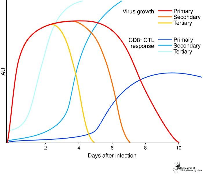 Influenza Virus Antibodies Influenza a Viruses Rap