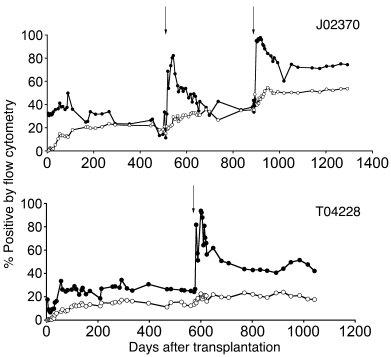 Efficient MGMTP140K-mediated in vivo selection in macaques (J02370 and T...