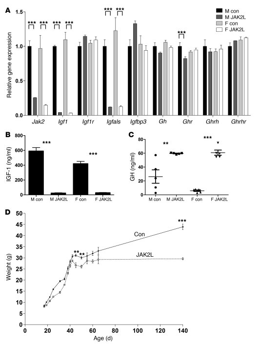 Effect of hepatocyte-specific deletion of JAK2 (JAK2L) on the GH signali...