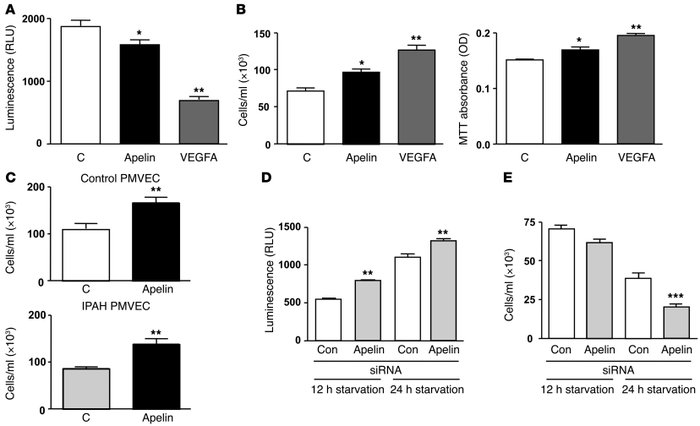 Apelin promotes PAEC survival. (A) Caspase 3/7 activity was used to meas...