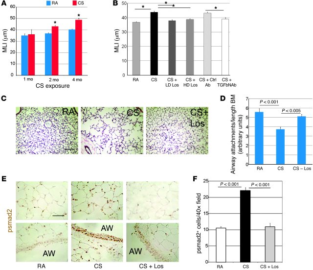 Losartan and TGF-β–neutralizing antibody inhibit chronic CS...