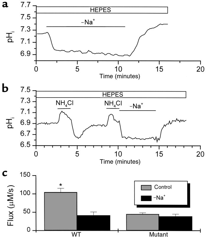 Na+ dependency of pHi regulation in WT and mutant CA1 neurons. (a) The e...