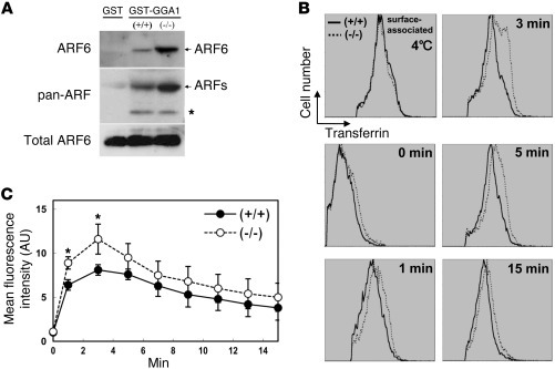 ARF6 activation and transferrin endocytosis in bone marrow cells. (A) Pr...