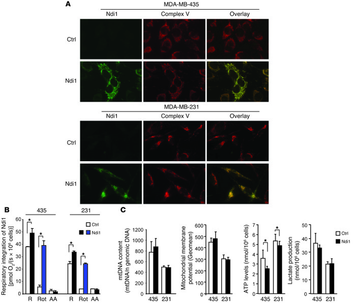 Enhancement of mitochondrial complex I activity by integration of Ndi1: ...