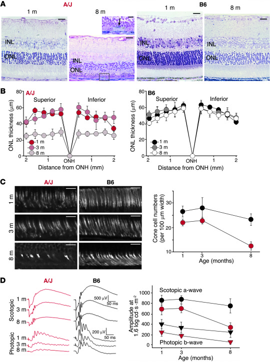 A/J mice display a pronounced age-dependent decline in vision. (A) Light...