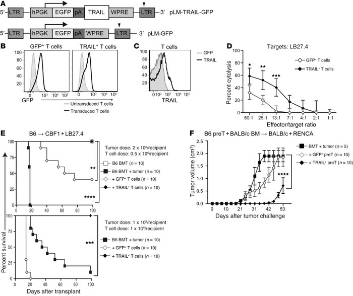 TRAIL+ T cells are strong antitumor agents.  (A) Representation of pLM-T...