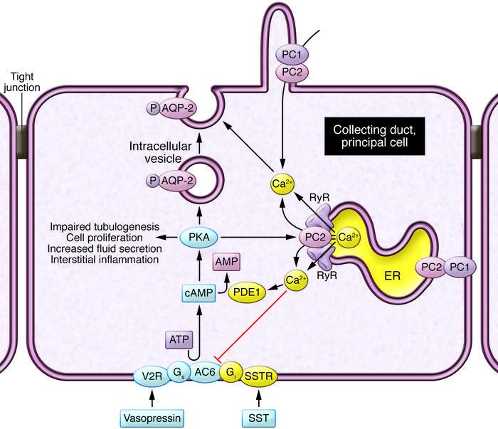 mechanism of disease genetics x clicics essay