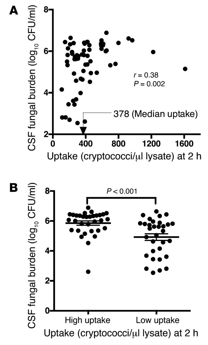Association of cryptococcal uptake by macrophages with patient fungal bu...