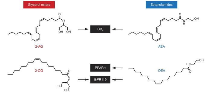 Chemical structures and molecular targets of lipid-derived mediators inv...