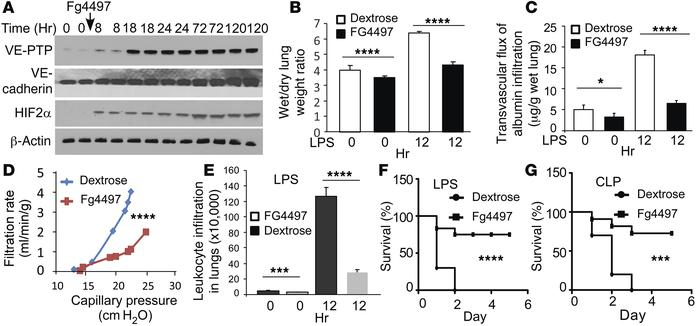 PHD2 inhibition improves lung fluid balance and mortality. (A) C57/BL6 m...