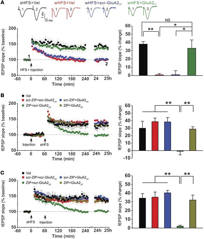 Decay Memory Active GluA2-dependent AMPAR
