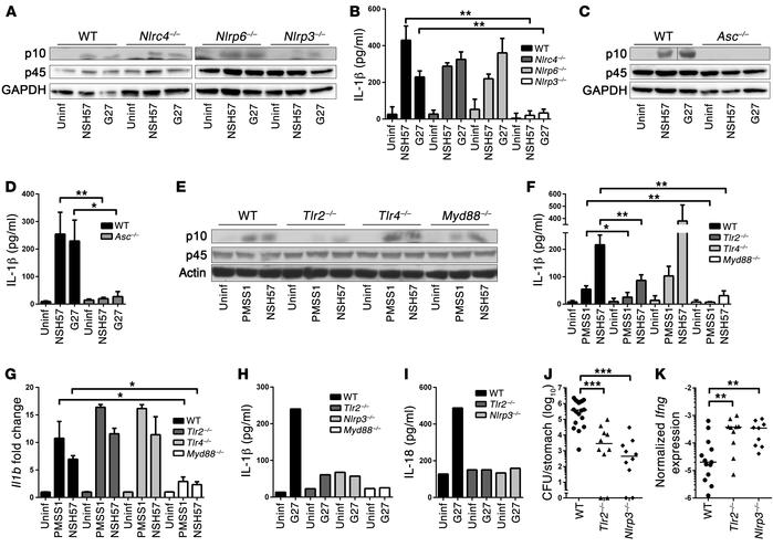 CASP1 activation by H. pylori depends on NLRP3, ASC, and TLR2.  (A–G) BM...