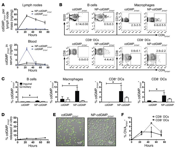 NP-cdGMP enhances LN uptake of CDNs. (A) Groups of BALB/c mice were inje...