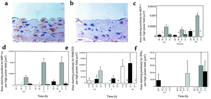 Immunohistochemical analysis of staining for MCP-1 in saline-treated rat...