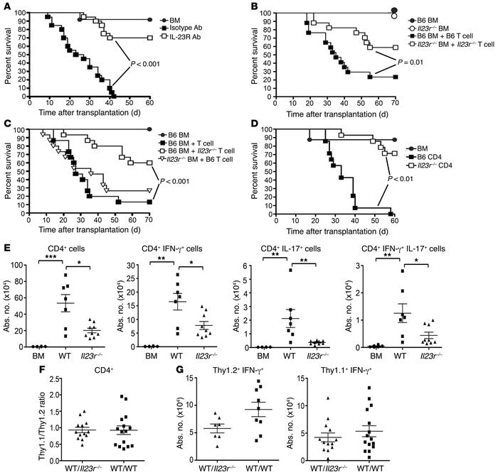 CD4+IL-23R+ T cells drive inflammation in the colon during GVHD. (A) BAL...