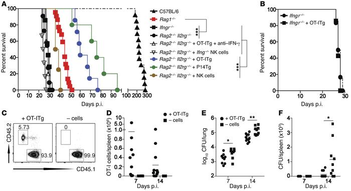 Noncognate memory CD8+ T cells and NK cells are sufficient to mediate ea...