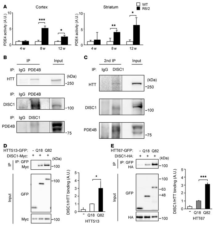 PDE4 activity could be regulated by the newly identified HTT-DISC1-PDE4 ...