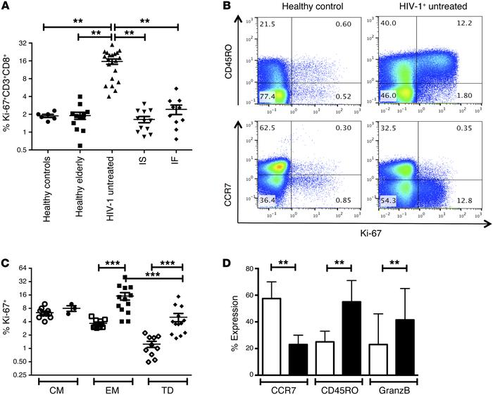Increased cycling of CD45RO+ CD8+ T cells in viremic HIV-1 infection. (A...