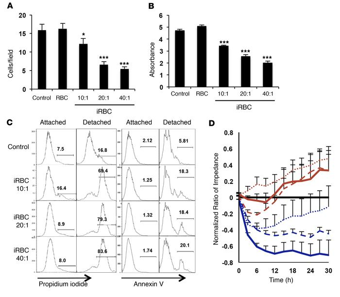 Pf-iRBCs induce a dose-dependent detachment from substrate and disrupti...