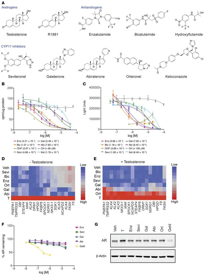 CYP17 inhibitors bind and inhibit AR transcriptional activity. (A) Struc...
