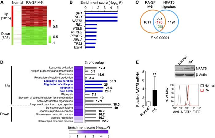 Enhanced NFAT5 signature in RA synovial macrophages. (A) Heatmap display...