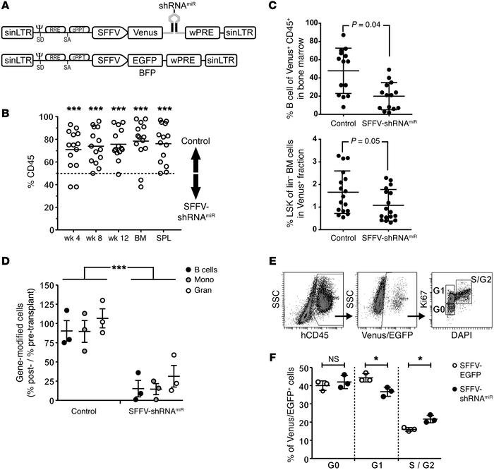 Knockdown of BCL11A reduces engraftment of murine and human hematopoieti...