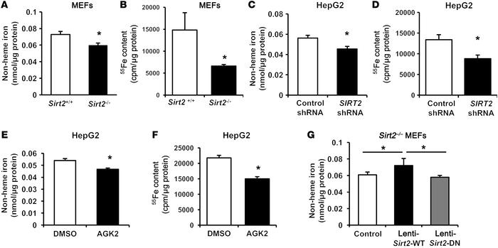 SIRT2 regulates cellular iron content. (A) Non-heme iron content in Sirt...