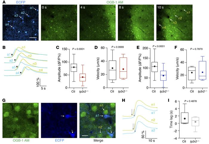 Astrocytic IP3R2 contributes to PID-related calcium elevations. (A and B...