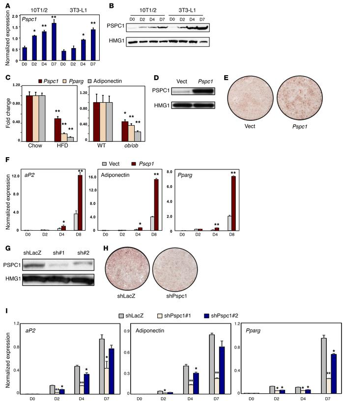 PSPC1 expression promotes adipogenesis. (A) Real-time PCR analysis of Ps...