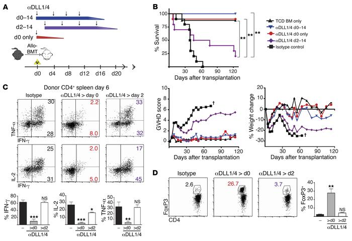 An early pulse of Notch signaling is critical to drive pathogenic T cell...
