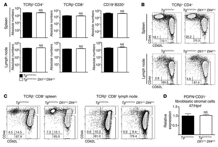 Ccl19-Cre–mediated Dll1 and Dll4 inactivation preserves lymphocyte numb...