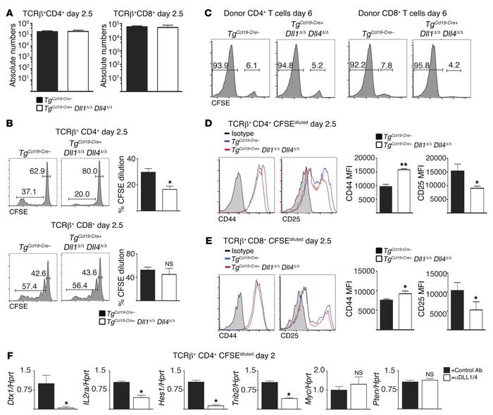 Ccl19-Cre–mediated Dll1 and Dll4 inactivation does not impair T cell re...