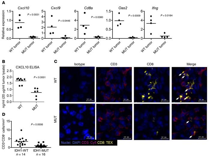 Syngeneic IDH-MUT murine gliomas demonstrate reduced chemokine- and IFN-...