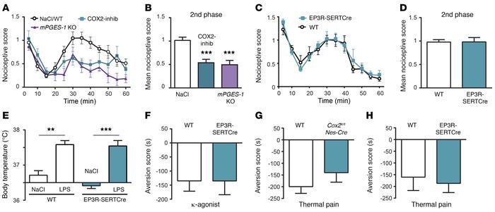 The involvement of EP3 receptors on serotonergic cells is specific for t...