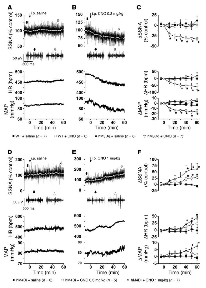 Selective activation and inhibition of ArcN NPY/AgRP neurons decreases a...