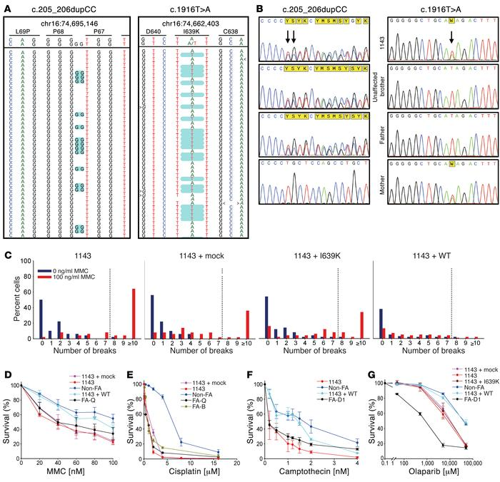 Identification and characterization of RFWD3 mutation. (A) WES data reve...
