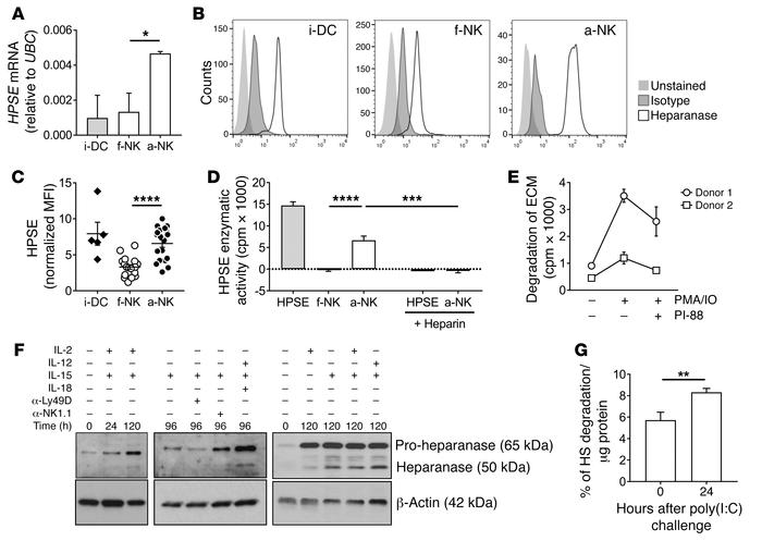 Activated NK cells express enzymatically active heparanase. (A–E) NK cel...