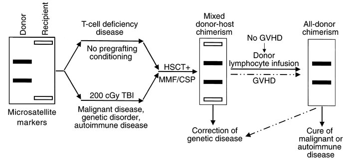Schematic illustration of nonmyeloablative HSCT-induced mixed donor-host...