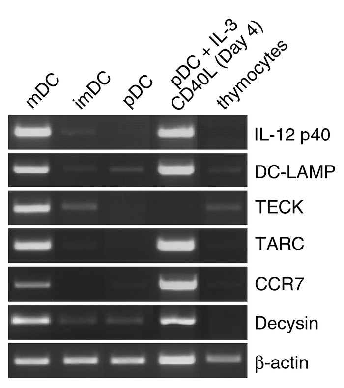 Thymic mDCs express genes specific to IDCs. Fresh thymic DC subsets, in ...